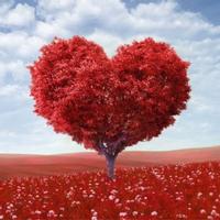 (Toàn quốc) Những trò thú vị ngày valentine có thể bạn đã biết