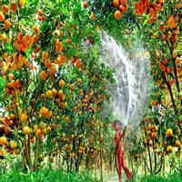 """Top 5 """"Vương quốc trái cây"""" nhất định phải đến trong mùa hè này"""