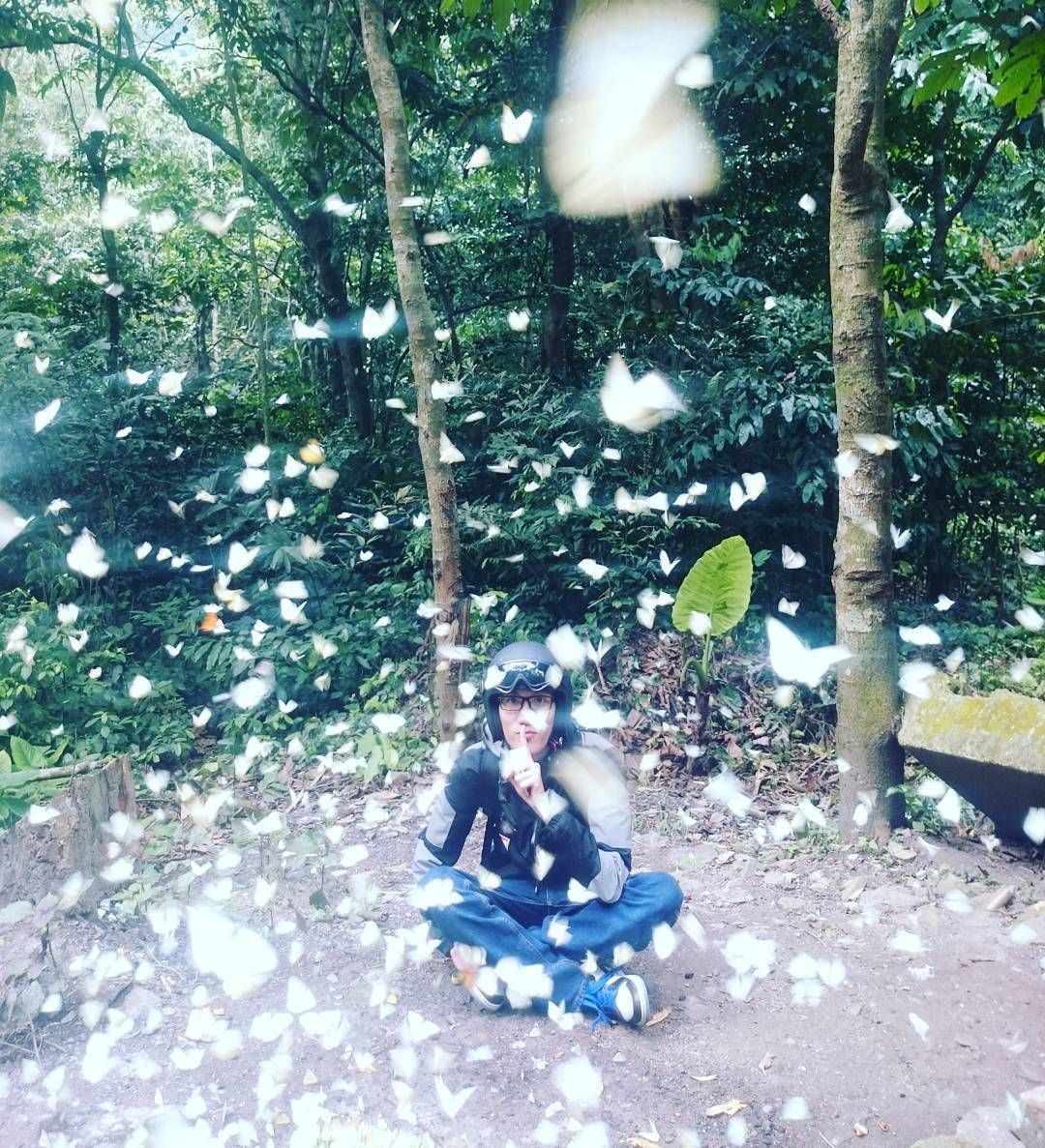 """15306771_591543994371152_6838114042955956224_n Hóa """"Hàm Hương"""" với hàng ngàn chú bướm cánh trắng rợp trời ở VN"""