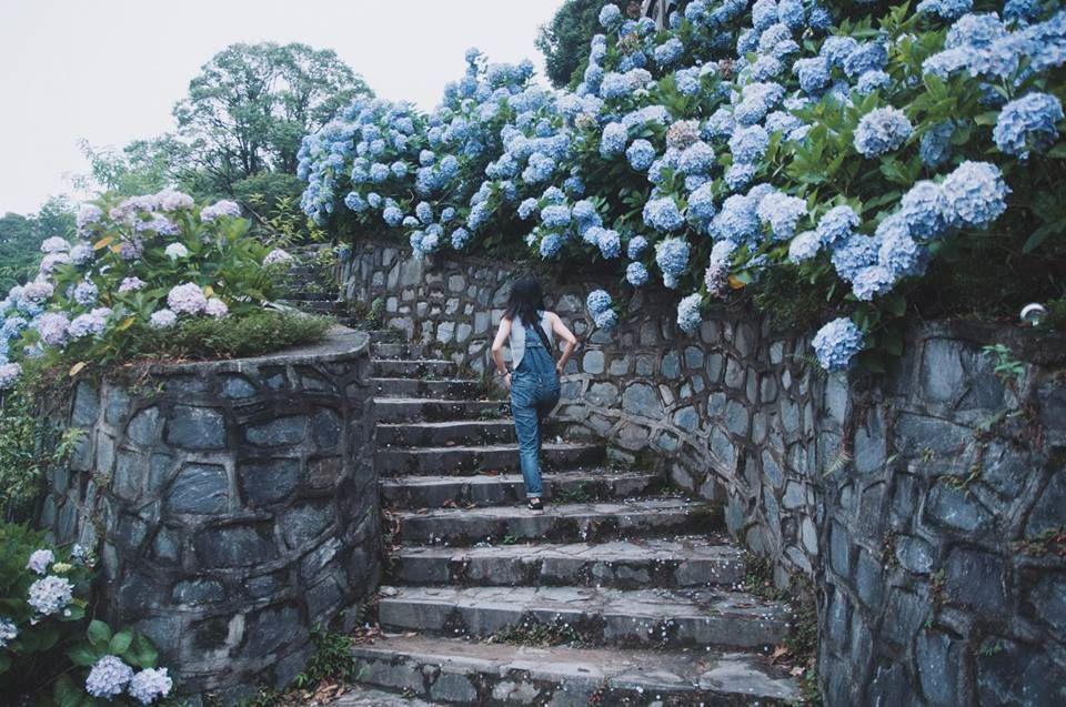 """Vẻ đẹp """"Vạn người mê"""" của vườn hoa cẩm tú cầu ở Cao Bằng"""
