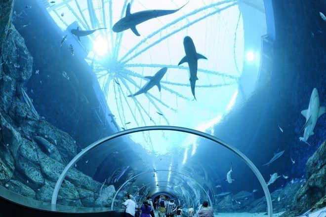 Image result for Thế giới mê hoặc của thủy cung lớn nhất thế giới