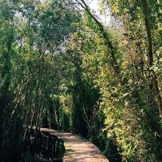 Khám phá khu rừng tràm độc đáo và hoang sơ tại Long An