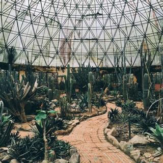 Chiêm ngưỡng vườn xương rồng nhà kính độc đáo ở vườn quốc gia Ba Vì
