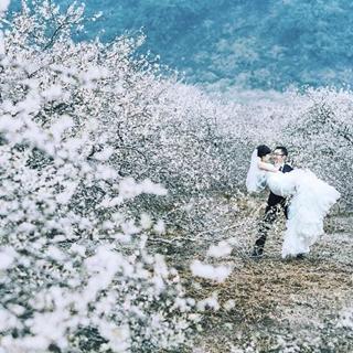 Dắt gấu lên Mộc Châu ngắm thời khắc Hoa Mận nở ngợp trời