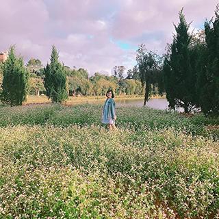 Đẹp siêu lòng 3 cánh đồng hoa Tam Giác Mạch ngay Đà Lạt