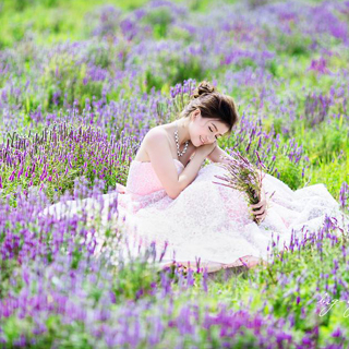Lãng mạn như ở Pháp tại cánh đồng hoa tím mới nở tại Bà Rịa - Vũng Tàu