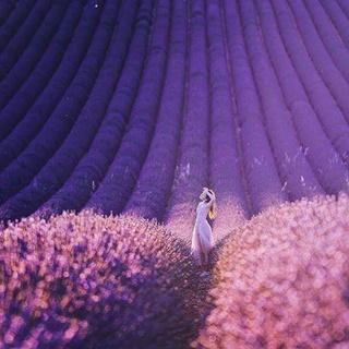 Thả hồn ở cánh đồng hoa oải hương đẹp nhất nước Pháp