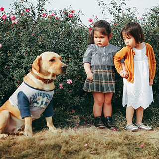 (Hà Nội) Cô bé má phính khiến cư dân mạng phải bật cười vì biểu cảm sợ chó siêu đáng yêu