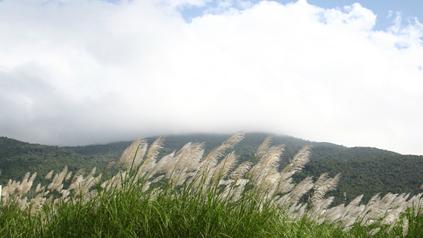 """Résultat de recherche d'images pour """"Những cánh đồng cỏ lau xứ Hàn"""""""