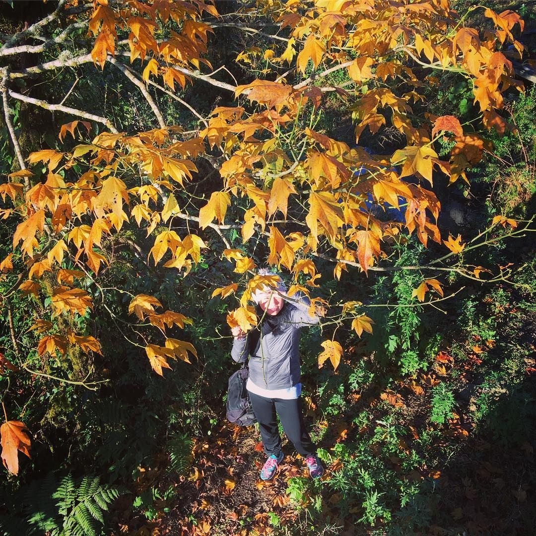 lá đỏ trên rừng rêu đỏ