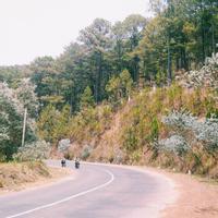 Lên Đà Lạt săn con đèo mang tên loài hoa đẹp nhất nước Úc.