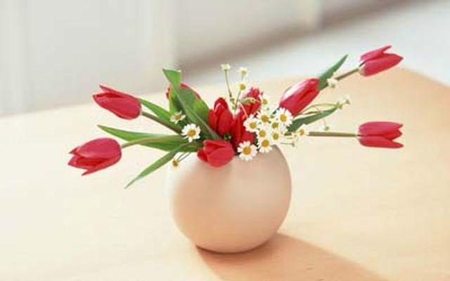 Flower Box - Pasteur
