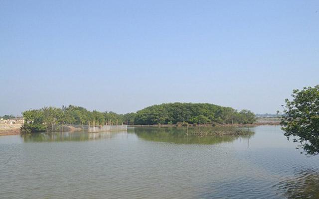 Rừng Ngập Mặn Rú Chá ở Huế