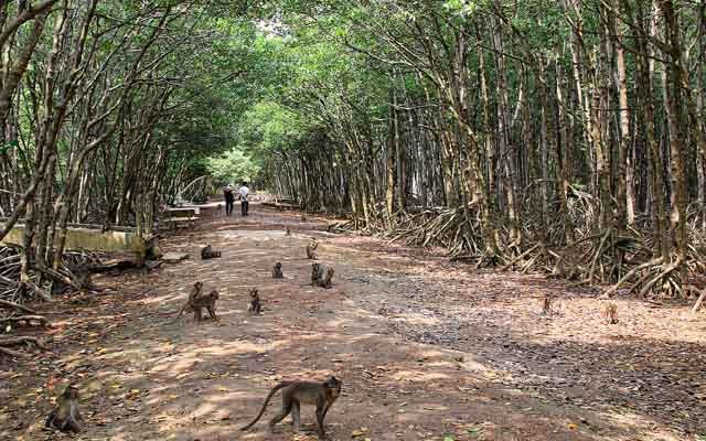 Đảo Khỉ - Cần Giờ ở TP. HCM