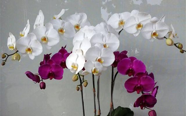 Anh's Flower - Nguyễn Văn Trỗi