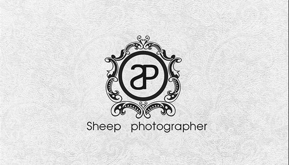 Sheep Photography - Tân Hải
