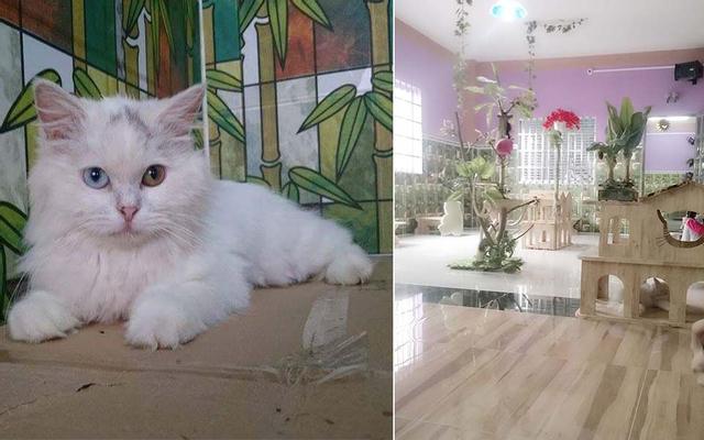 Lâu Đài Mèo Cafe - Milktea - Quốc Lộ 22 ở TP. HCM