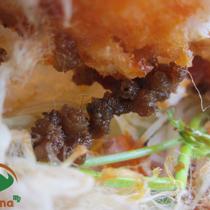 Bánh Mì Pate - Hương Vị Pleiku - Ngô Tất Tố