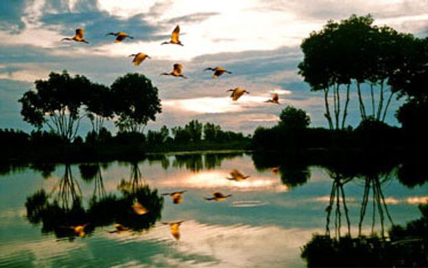 Vườn Quốc Gia Mũi Cà Mau Ngọc Hiển Cà Mau