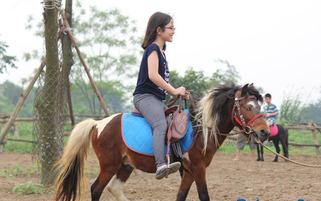 Nông Trại Dê Trắng - Tản Lĩnh ở Hà Nội