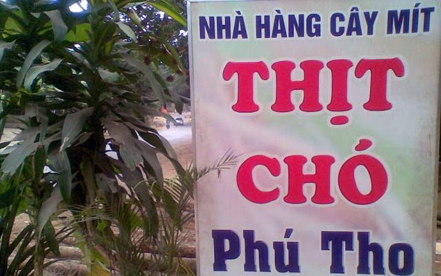 Nhà Hàng Thịt Chó Cây Mít ở Lào Cai