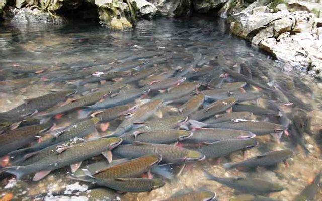 Suối Cá Thần Cẩm Lương ở Thanh Hoá