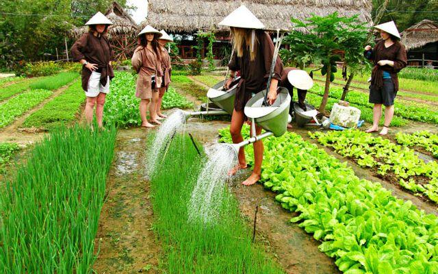 Làng Rau Trà Quế Hội An - Cẩm Hà ở Quảng Nam