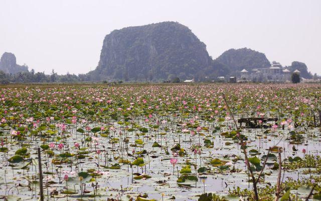 Hồ Sen Hòa Xuân ở Đà Nẵng