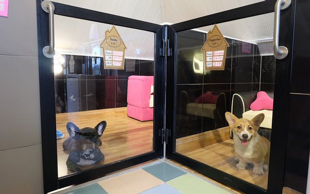 Bed and Pet-first - Dog Hotel ở TP. HCM