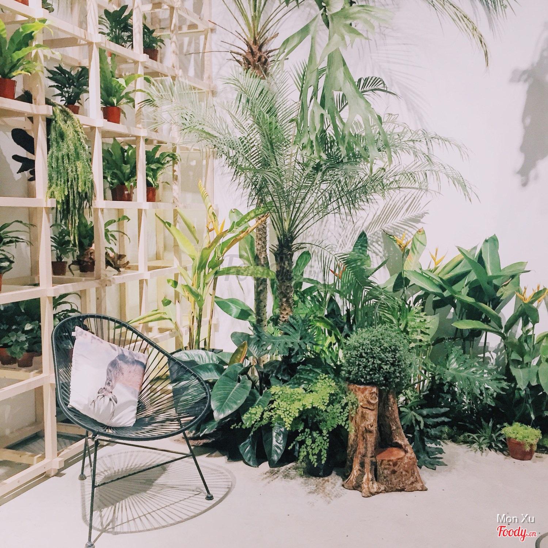 Kết quả hình ảnh cho Tropical Forest, ngõ 298 Tây Sơn