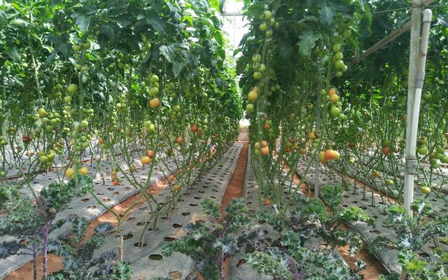 Giant Pumpkin Garden - Khu Vườn Bí Ngô Khổng Lồ ở Lâm Đồng