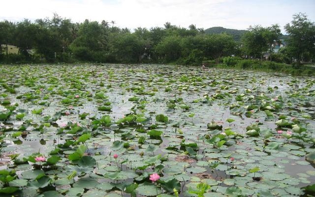 Hồ Tân Trung ở An Giang