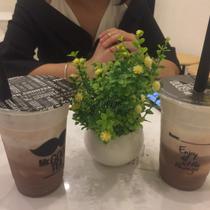 Mr Good Tea - Cẩm Phả