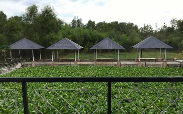 Cây Gõ, Xã An Phú Củ Chi TP. HCM