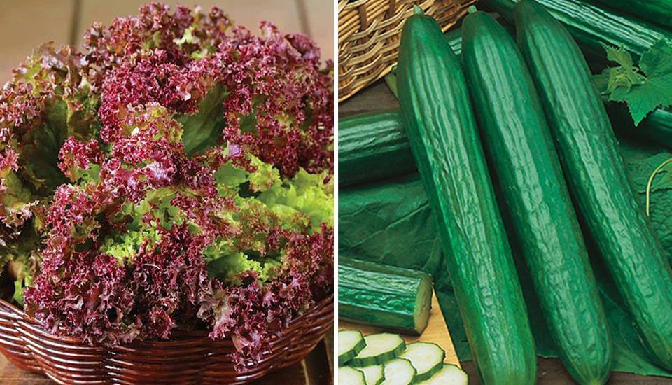 Happy Organic - Cửa Hàng Thực Phẩm Hữu Cơ